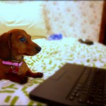 ブログの引っ越しをして新しいブログの操作がままならないが・・・