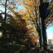 紅葉の町並み