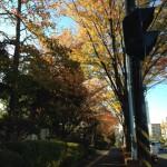 紅葉がきれいだった一週間@湘南ジョギング走記(11/17-11/23)